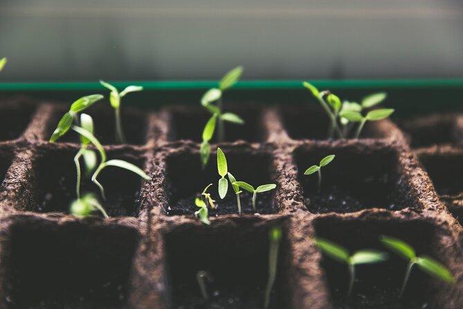 Byron Bay Permaculture Workshop - Seed Saving