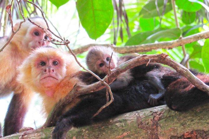 Monkey Mangrove Hike