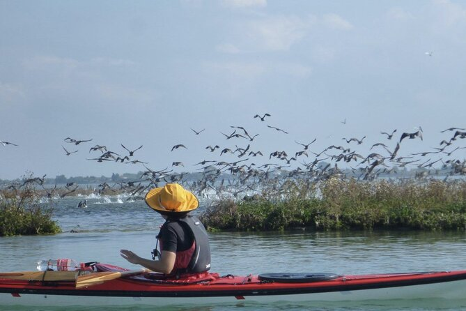 3 Hour Natural Lagoon Kayak Tour in Venice