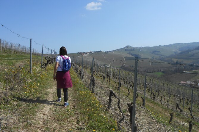 Hiking and wine tour starting from Alba