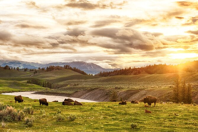 Yellowstone National Park Tour from Jackson Hole