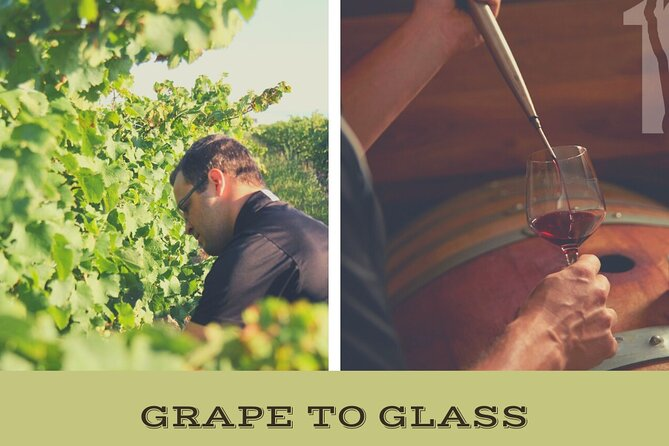 Grape to Glass Wine Tour at Between The Lines Winery