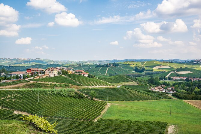 Moscato and Barbera Wine Tastings near Asti