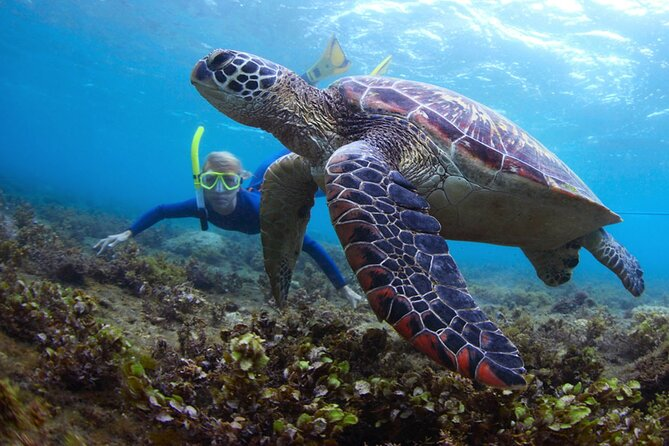Snorkeling and Watersport Activities at Fujairah Snoopy Island