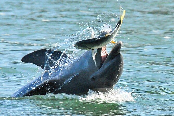 Dolphin Adventure in The 10,000 Islands Wilderness Preserve