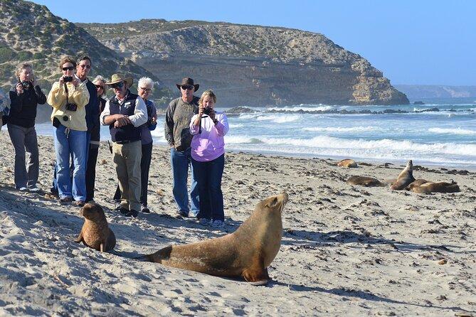 Full day Seal Bay Experience departing from Kangaroo Island