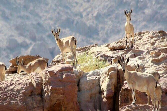 Wadi Mujib Ibex Trail Hiking Experience from Amman