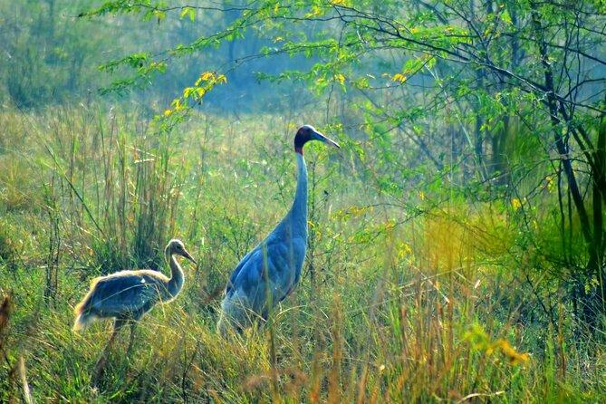 Bharatpur's Keoladeo National Park From Delhi and Drop Jaipur