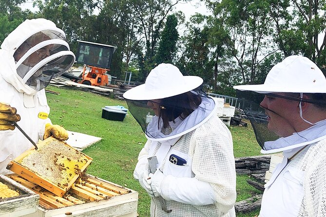 Small-Group Bee Farm Tour Experience in Brisbane