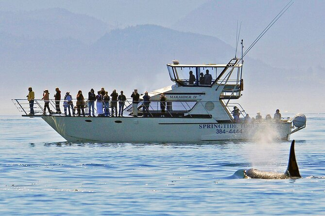 Victoria Whale Watch Tour