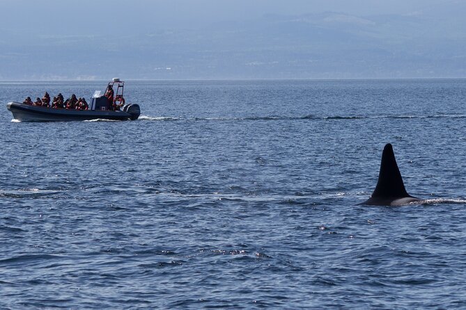 Private Zodiac Whale Watching Tour from Victoria