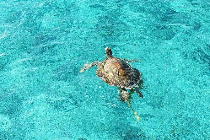 Green Turtles Snorkel,Coral Reef Swim & Island Beach Visit