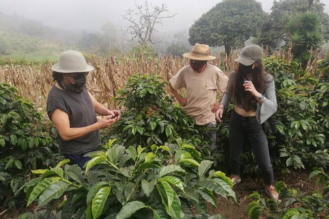 Rural Coffee Tour / Coffee Tour