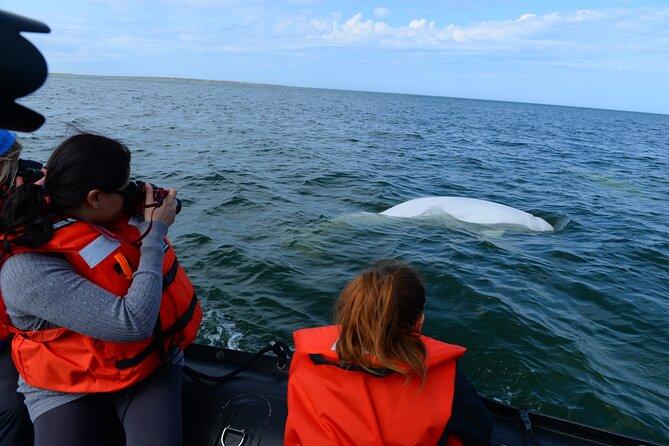 Beluga Whale Adventure, Direct Calgary to Churchill