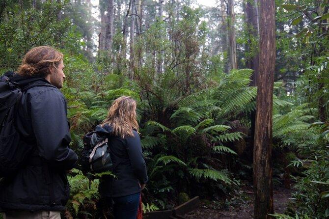 3 Hour Rainforest Walking Tour in Badger Creek