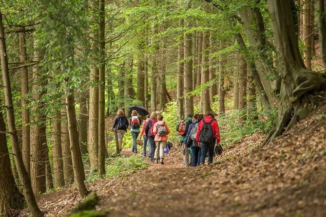 Forest Bathing in Hampshire