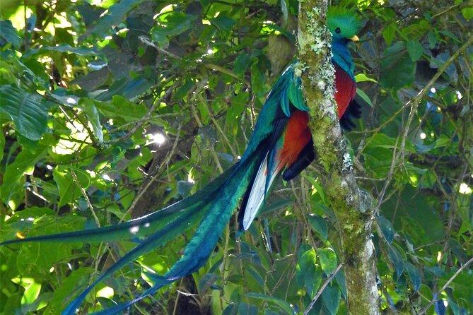 Quetzal tour on lake atitlan
