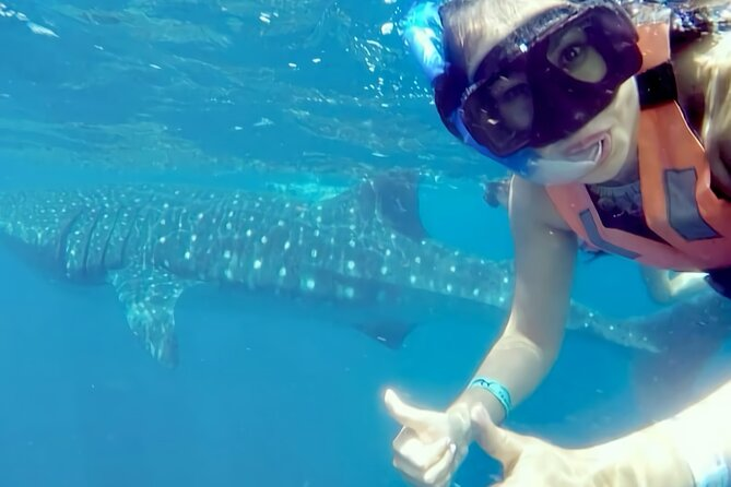Full-Day Whale Shark Snorkeling Adventure in Isla Mujeres