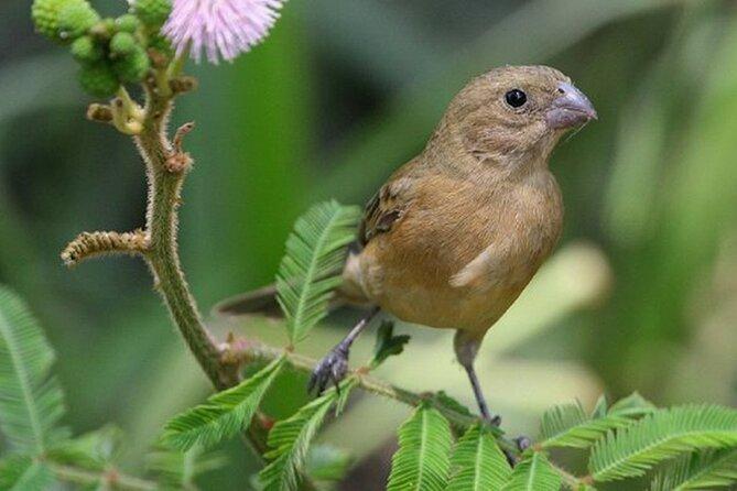Gli uccelli dell'altopiano della Sierra Madre e la città di El Tuito