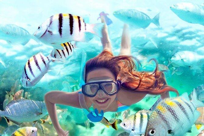 Aqua Adrenaline   Reefs + Cenote + Lagoon / Turtles