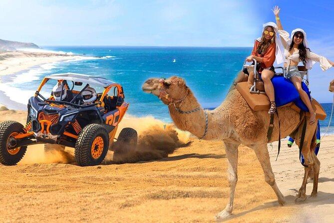 Combo Camel Ride & UTV 4X4 Adventure. - Los Cabos