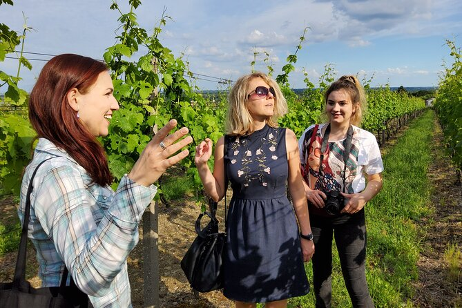 Day trip from Bratislava: Vineyards & Winery Tour