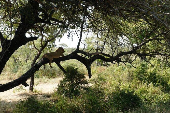 Day Trip Selous Safari Tour from Zanzibar