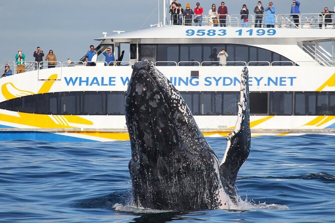 3 Hour Discovery Cruise Whale Watching Experience