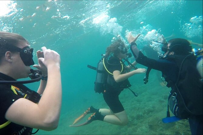 Scuba diving & hermitage red hills