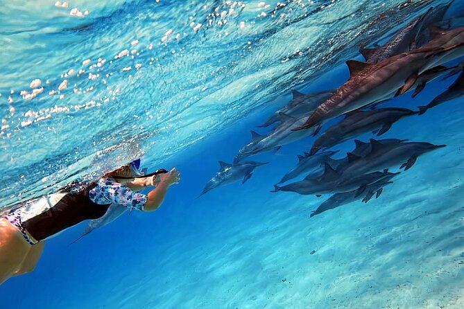 Sataya Dolphin House Snorkel Trip - Marsa Alam