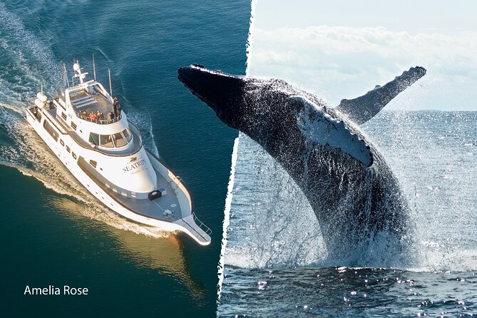 Whale Watching Cruise on a Superyacht in Reykjavik