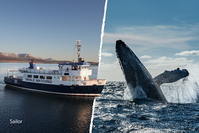 Whale Watching and Marine Life Tour in Faxafloi