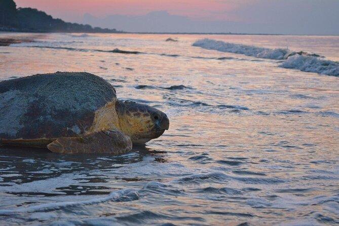 Turtle Nesting Sightseeing Tour in Tortuguero