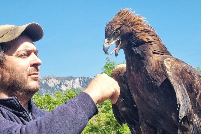 Interactive path of birds of prey