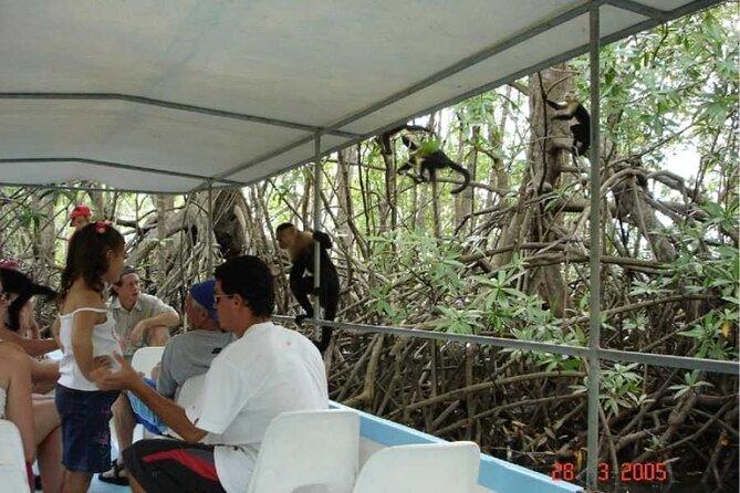 Monkey Mangrove safari