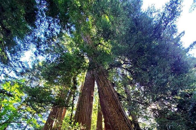 Muir Wood, Sausalito and Cavallo Point Tour