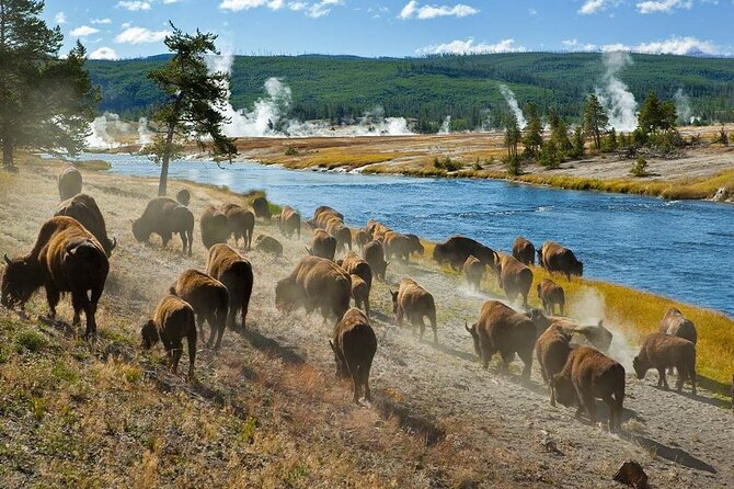 6 Day Private Yellowstone and Grand Teton Tour from Jackson