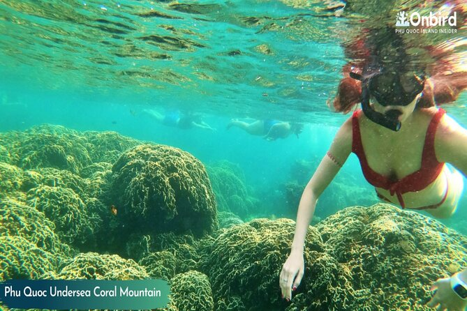 PRIVATE-Snorkelling at Coral Mountain & U-Turn reef in the early morning