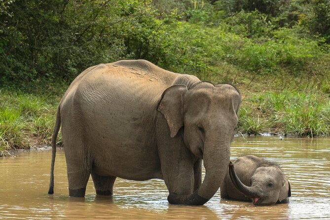 Yala National Park Private Safari Tour