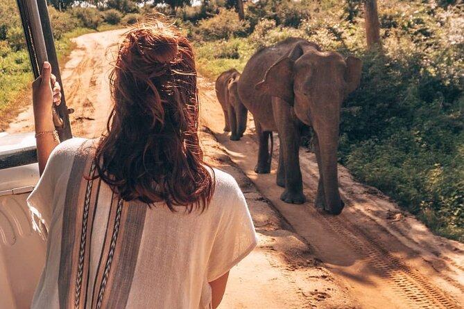 Udawalawa Safari Drive From Galle, Weligama, Mirissa & Dickwella
