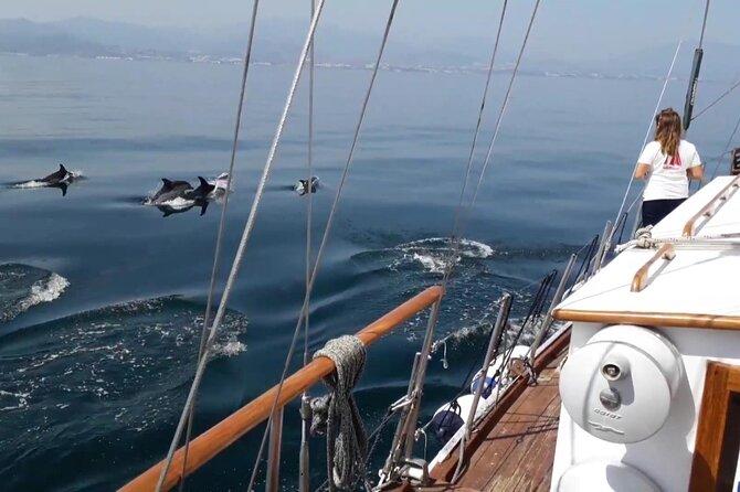 Dolphin Watching Adventure in Estepona Bay