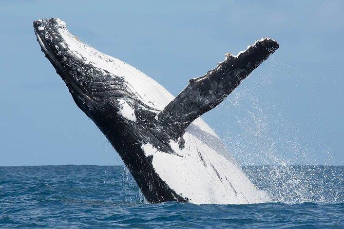 Whale watching in Puerto Vallarta cruise