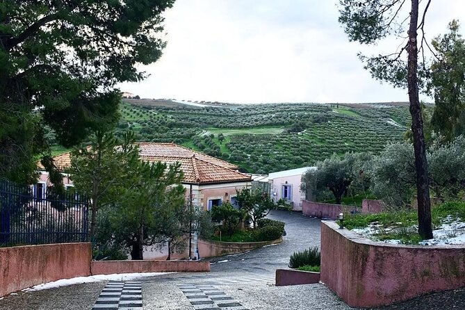Private Olive Oil Tasting Tour @ Family Owned Organic Olive Oil Mill