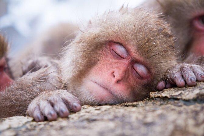 1-Day Winter Tour From Nozawa & Iiyama: Snow Monkeys, Zenko-ji Temple & Sake