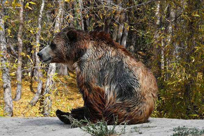 5-Day Summer Yellowstone National Park Hot Springs Essence Tour