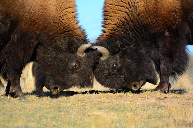 5-Day Summer Yellowstone National Park and Grand Teton Park Hot Springs Tour
