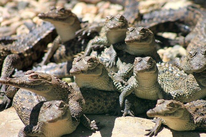 Eco Tour - Turtles, crocodiles & beach
