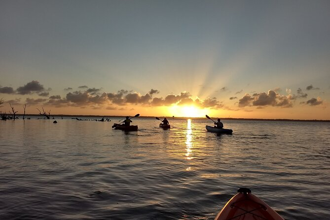Sunset kayaking tour at Manatee Cove with Manatee and dolphin sightings