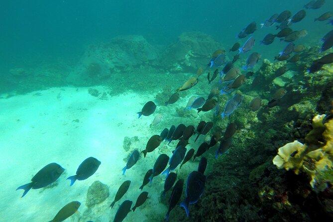 Rosario Islands - Snorkel - Private Beach & Mambo Beach Club Baru