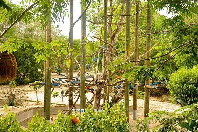 Cartagena National Aviary Private Tour